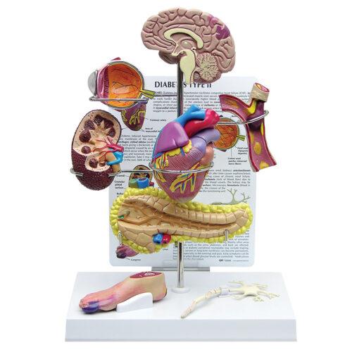 Órganos y sistemas